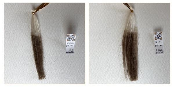 髪萌1回目、2回目