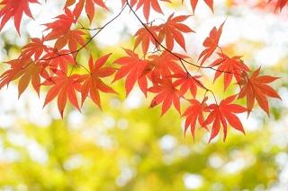 秋の白髪染め